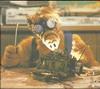 Ремонт форсунок на Vivaro,кот,где,почём - последнее сообщение от Vital39RUS